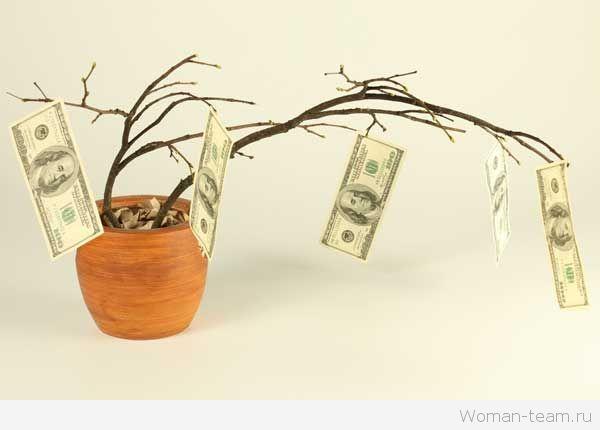Денежное дерево: как ухаживать