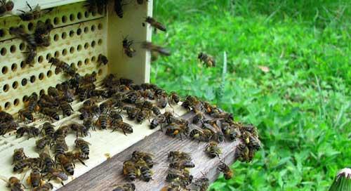 Мед при простатите польза и вред