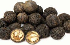 Полезные свойства, применение и противопоказания чёрного ореха