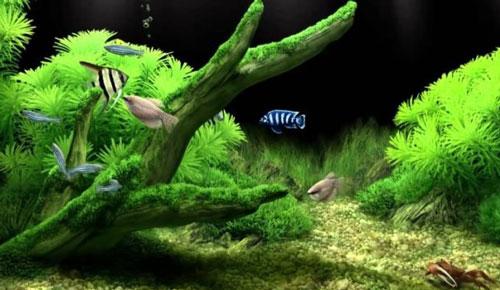 Сколько энергии потребляет компрессор в аквариуме aquael