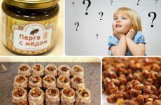 Как принимать пчелиную пергу: дозировка детям и беременным, хранение, полезные свойства и противопоказания