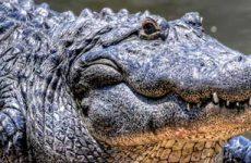 Что значит видеть во сне крокодилов женщине и мужчине?