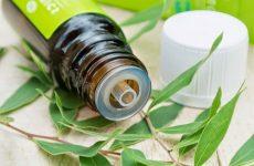 Как применять масло чайного дерева в домашних условиях, его лечебные и косметические свойства
