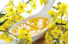 Польза и вред рапсового масла для организма