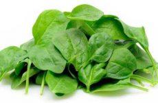 Польза и вред шпината для мужчин и женщин