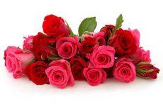 Что значит видеть во сне розы женщине и мужчине?