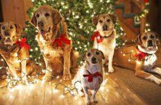 Как встретить новый год Собаки 2018: современные сценарии